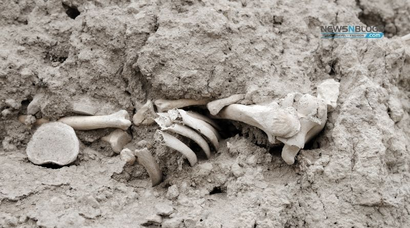 Human bones recovered from Defense C, Lahore