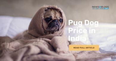 Pug Dog Price in India