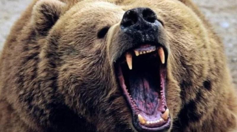 उत्तराखंड के रुद्रप्रयाग के अगस्त्यमुनी ब्लॉक में भालू का आतंक देखने को मिला है।