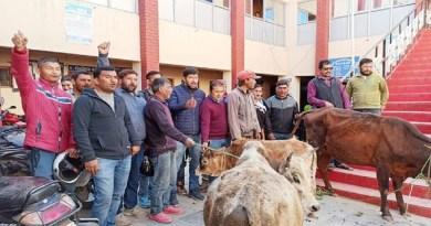 अल्मोड़ा में आवारा पशुओं का आतंक लगातार बढ़ता ही जा रहा है।