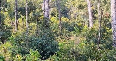 उत्तराखंड के अल्मोड़ा में स्याही देवी के ग्रामीणों ने एक बड़ी मिसाल पेश की है। चीड़ के जंगल में ग्रामीणों ने चौड़ी पत्तियों का जंगल अपनी मेहन और लगन के बल पर तैयार किया है।