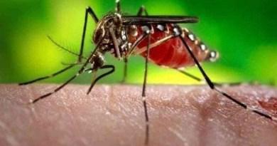 उत्तराखंड में कोरोना संकट के बीच डेंगू से निपटा ने एक बड़ी चुनौती होगी। इस चुनौती से निपटने के ले लिए सरकार ने कम कस ली है।