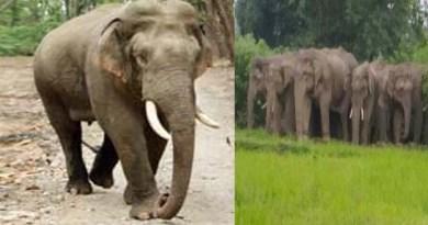 उत्तराखंड में हाथियों का आतंक जारी! घर लौट रहे शख्स को कुचलकर मार डाला, परिवार में पसरा मातम