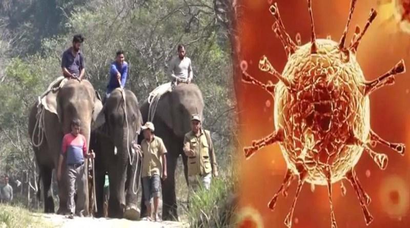उत्तराखंड में कोरोना का खौफ! राजाजी टाइगर रिजर्व की चीला रेंज में अलर्ट जारी, शिफ्ट किए गए हाथी