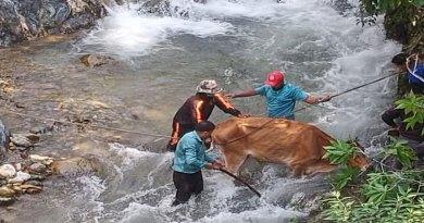 उत्तराखंड: आपदा प्रबंधन टीम को सलाम! गदेरे में गिरी गौमाता को बचाया, देखें तस्वीरें