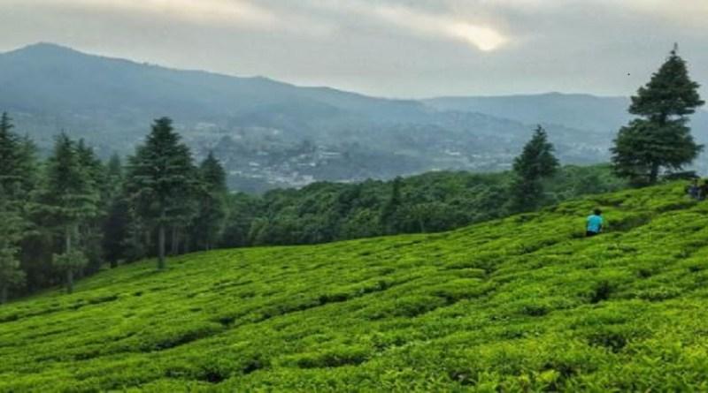चाय की चुस्की का अपना ही आनंद है। सिर्फ भारत में ही लोग चाय के दीवाने नहीं, बल्कि यूरोपीय देशों में भी बड़ी तादाद में लोग चाय पीना काफी पसंद करते हैं।