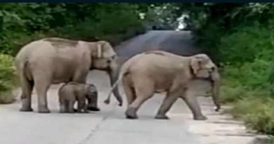 उत्तराखंड के जिम कॉर्बेट पार्क से अक्सर जंगली जानवरों के शहर में आने की खबरें आती रहती हैं।