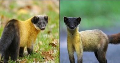 उत्तराखंड के जंगल, जानवारों के लिए उनका गर हैं। पहाड़ी जंगलों में कई ऐसे तरह के जीव भी पाए जाते हैं, जो कहीं और नहीं देखे जाती हैं।