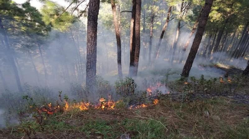 उत्तराखंड में गर्मियों में जंगलों में आग की घटनाएं बढ़ जाती हैं। इसके पीछे कई कारण होतें हैं। उनमें से एक कारण शरारती तत्व हैं।