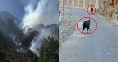 जोशीमठ के नंदा देवी राष्ट्रीय पार्क के तहत आने वाले नीति घाटी में बम्पा, फरकिया, घमसाली के जंगलों में भीषण आग लग गई है।