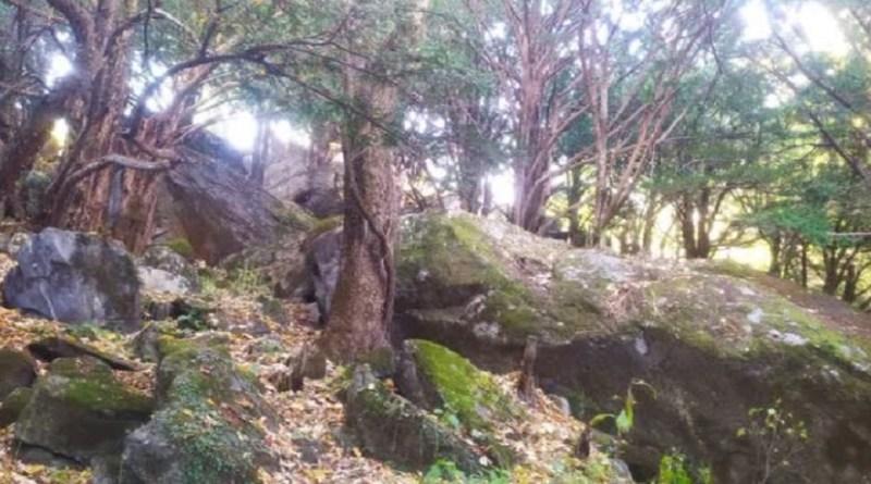 उत्तरकाशी के सुक्की गांव के पास दो हेक्टेयर से ज्यादा जमीन में फैले घने थुनेर के जंगल को योग धाम के रूप में विकसित करने की मांग ने एक बार फिर जोड़ पकड़ा है।