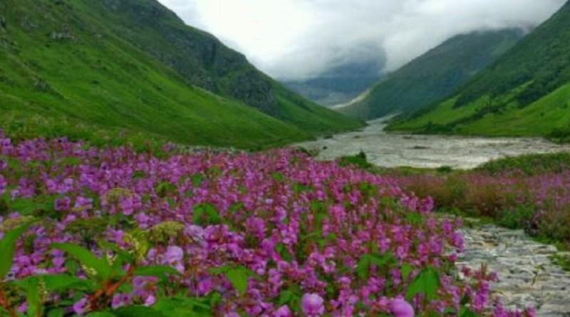 उत्तराखंड के चमोली जिले में स्थित फूलों की घाटी के बारे में जानते हैं आप? फूलों की घाटी पूरी दुनिया में अपनी खूबसूरती के लिए मशहूर है।