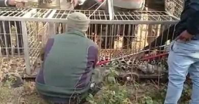 नैनीताल: बाउंड्री पर लगाए गए क्लच वायर में गुलदार के फंसने से मचा हड़कंप! खेत का मालिक हुआ गिरफ्तार