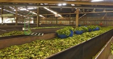अल्मोड़ा के लोगों के लिए अच्छी खबर है। यहां चाय के कारोबार से जुड़े लोगों को रोजगार मिल सकता है।