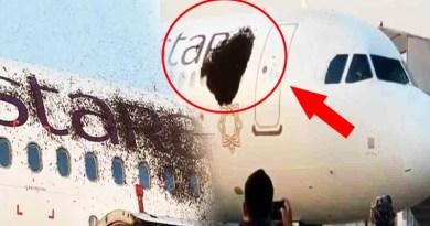 कोलकाता के नेताजी सुभाष चंद्र बोस अंतर्राष्ट्रीय हवाई अड्डे में एक फ्लाइट में अचानक मधुमक्खी का झुंड चिपक गया।
