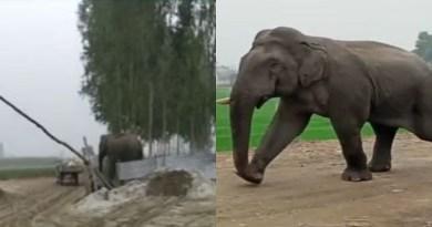 हरिद्वार जिले के लक्सर गांव में उस वक्त अफरातफरी मच गई, जब एक जंगली हाथी भोगपुर के जंगलों से निकल कर गांव में आ गया। जंगली हाथी के अचानक गांव में आने से लोग दहशत में आ गए।