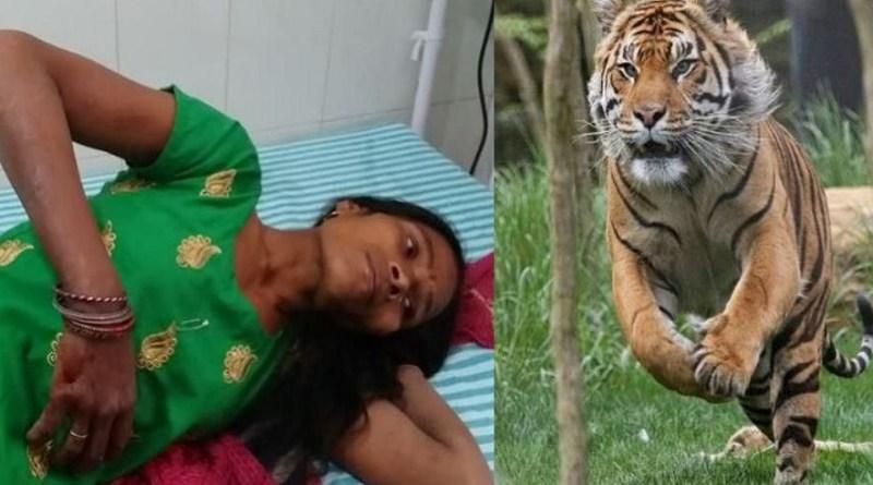 नैनीताल के रामनगर में बाघ के ग्रामीणों पर हमले की घटनाएं पिछले कुछ दिनों में काफी बढ़ गई हैं। सोमवार को भी गोजानी गांव में बाघ ने जंगल में एक महिला पर अचानक हमला कर दिया। हमले में महिला गंभीर रूप से घायल हो गई।