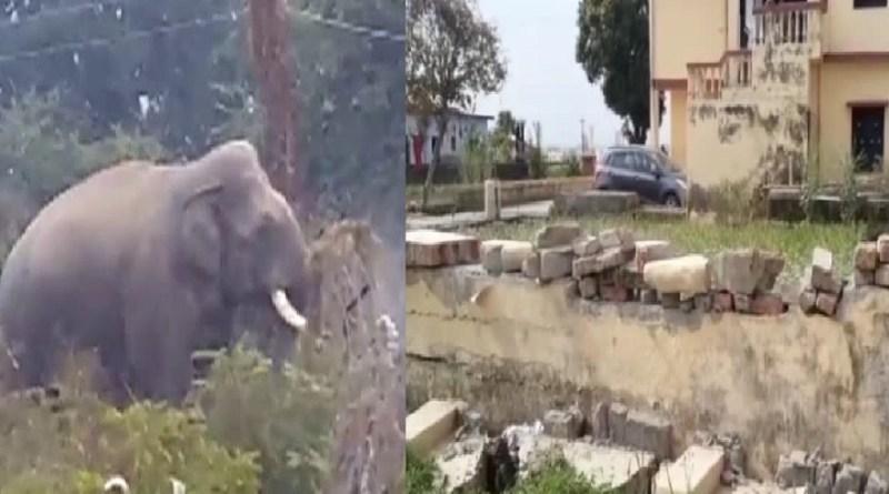 उत्तराखंड में नहीं थम रहा हाथियों का आतंक, अब ऋषिकेश के इस इलाके में हाथी ने बोला धावा, खौफ में लोग