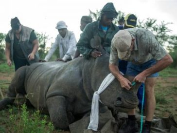 Online rhino horn auction opens in South Africa