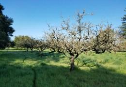 Southeast Santa Rosa Greenway