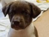 Shelter Animals Find Homes