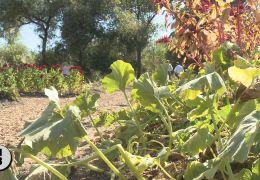 Dry Creek Restoration Showcased