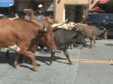 Longhorns Tromp through downtown Santa Rosa