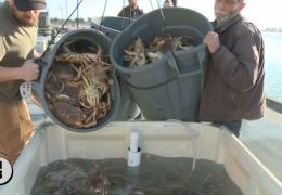 Commercial Crab Season Pushed Back to December 15th