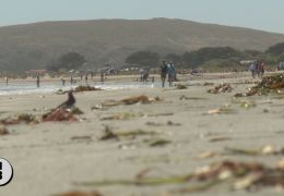 Crush at Sonoma Beaches Expected as State Closes Lots for Holiday