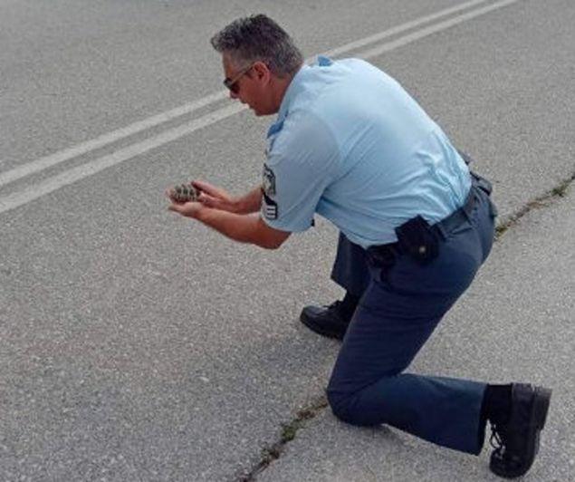 βοήθησε ένα μικρό χελωνάκι να περάσει τον δρόμο!
