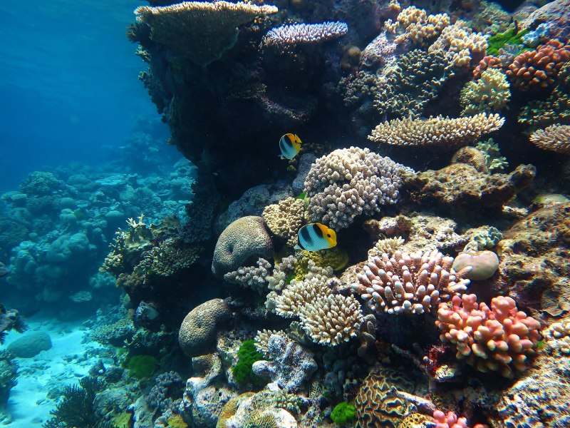 The Great Barrier Reef, one of the coral reefs threatened by ocean acidification.