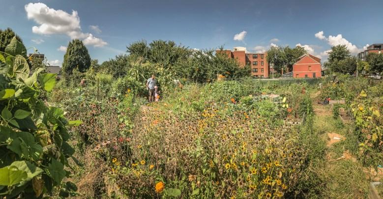Virginia Avenue Community Garden