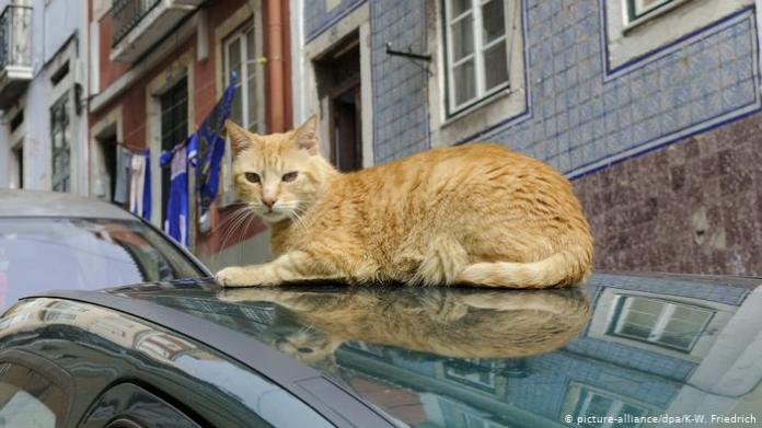 A cat lounges on a car roof