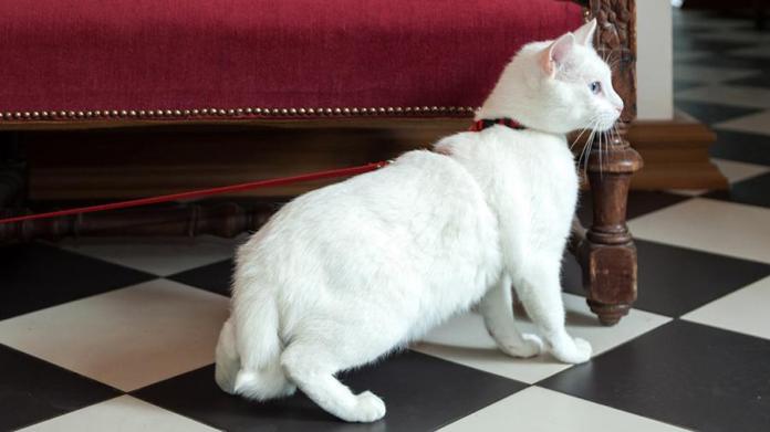 Меценат из Франции оставил наследство котам Эрмитажа