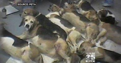 Comisia Europeană: România încalcă directiva legată de experimentele pe animale