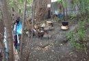 AUSTRIA: Un român a trăit neobservat în Prater timp de opt ani