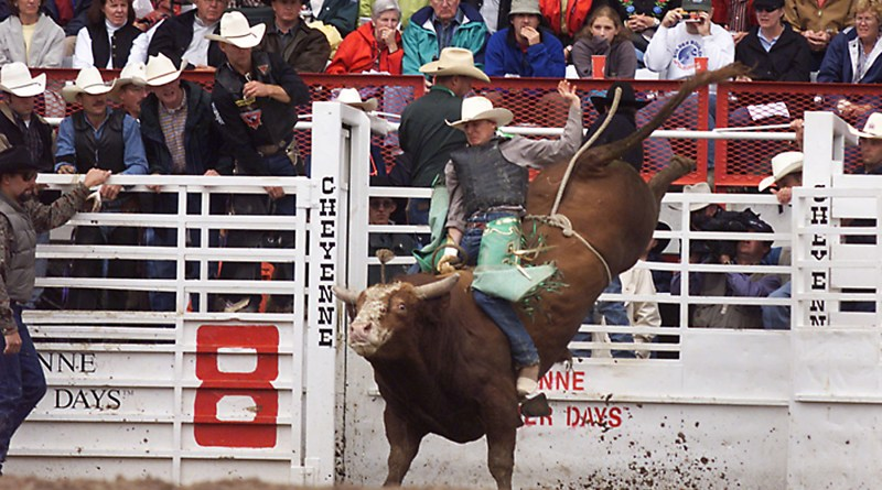 (Image) CPS Energy employees save up vacation time to volunteer for the Stock Show & Rodeo