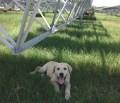 solar sheepdog, Alamo 2