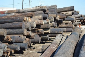 In 2014, CPS Energy recycled 7,000 poles.