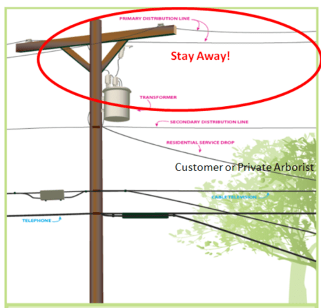 Utility Lines and Trees