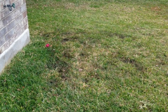 (Image) Mud spots identify a potential underground water leak.