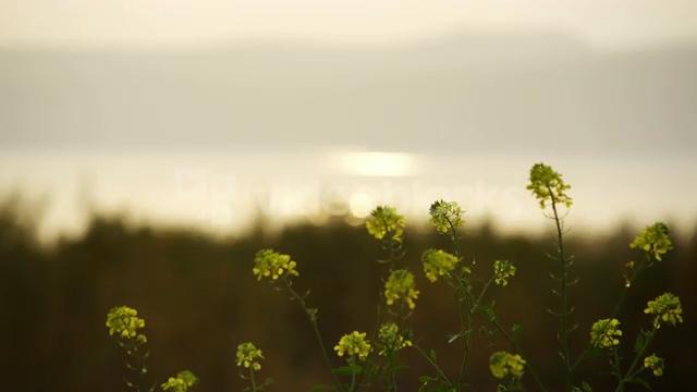 rack-focus-between-yellow-flowers-and-mountainous-coastline_bjzsqlfxh__PM13-08-07