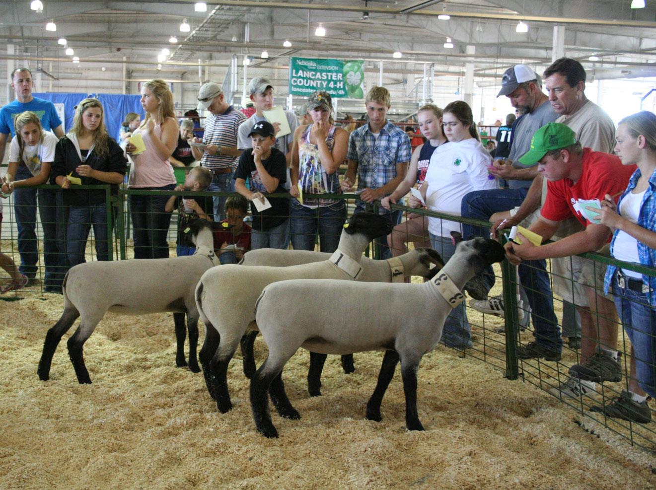 Livestock Judging Contest Aug 4