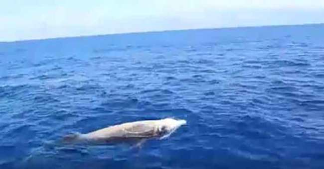Cuvier's beaked whale spotted off the coast of Dbayeh | Source: Facebook/NadimKnaider