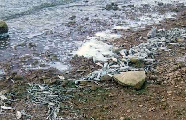 Dead fish wahed up on the shores of Lake Qaraoun | Source: MTV