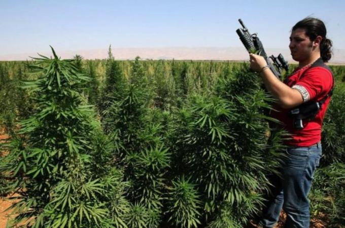 An armed cannabis farmer inspects his crops in the village of Knaysseh in Lebanon's Bekaa | Source: AFP/RamziHaidar