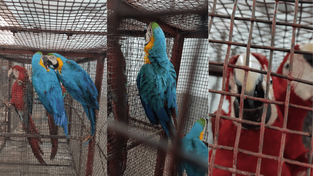 18 - Exotic Birds Rescued by BSF from Indo Bangla Border