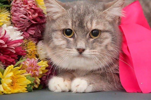 Харків, кішка Грета шукає сім'ю, опікун: Тетяна 066 754 3006