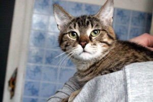 Десять навколонаукових фактів про домашніх котів