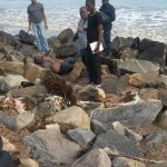 Man found dead on seawalls